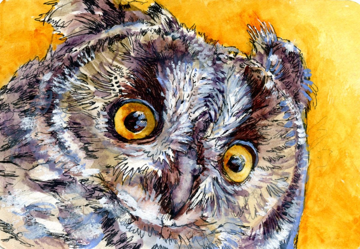 Owl's Eye -Postcards for the Lunch Bag