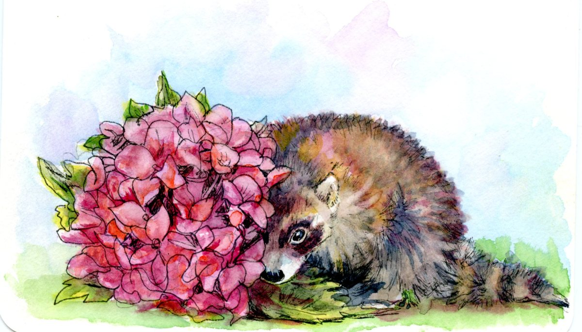 Raccoon Peek-a-boo: Postcards for the Lunch Bag