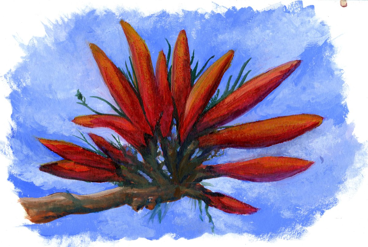 Pencil and the Coral Tree