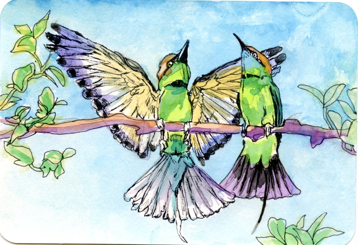 Bee-eaters Rejoicing -Postcards for the Lunch Bag