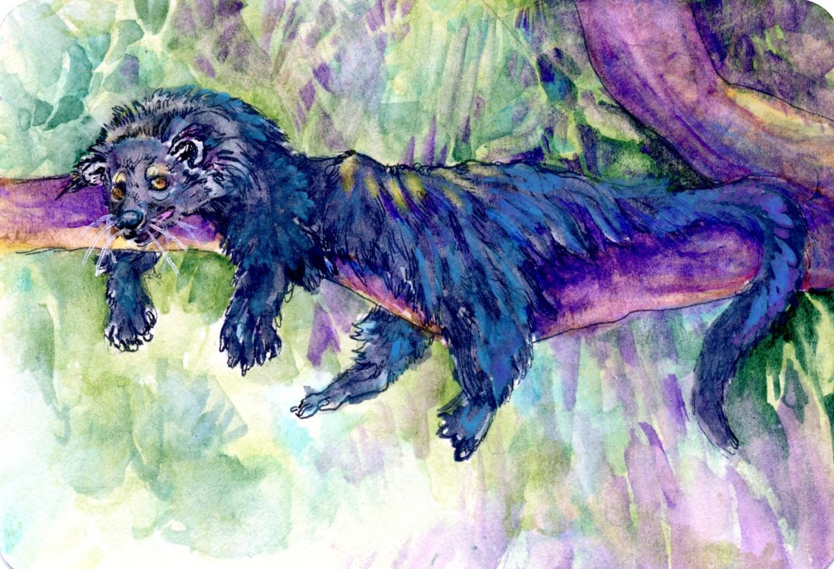 Binturong – Postcards for the Lunch Bag