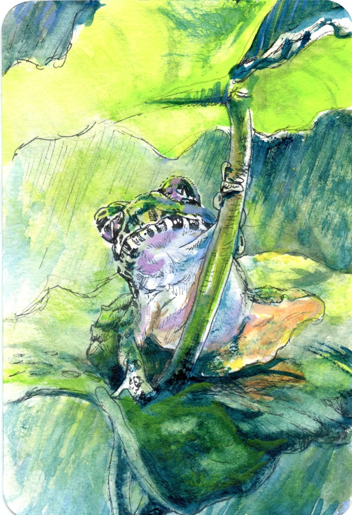 Even Frogs Need Umbrellas Sometimes – Postcards for the LunchBag
