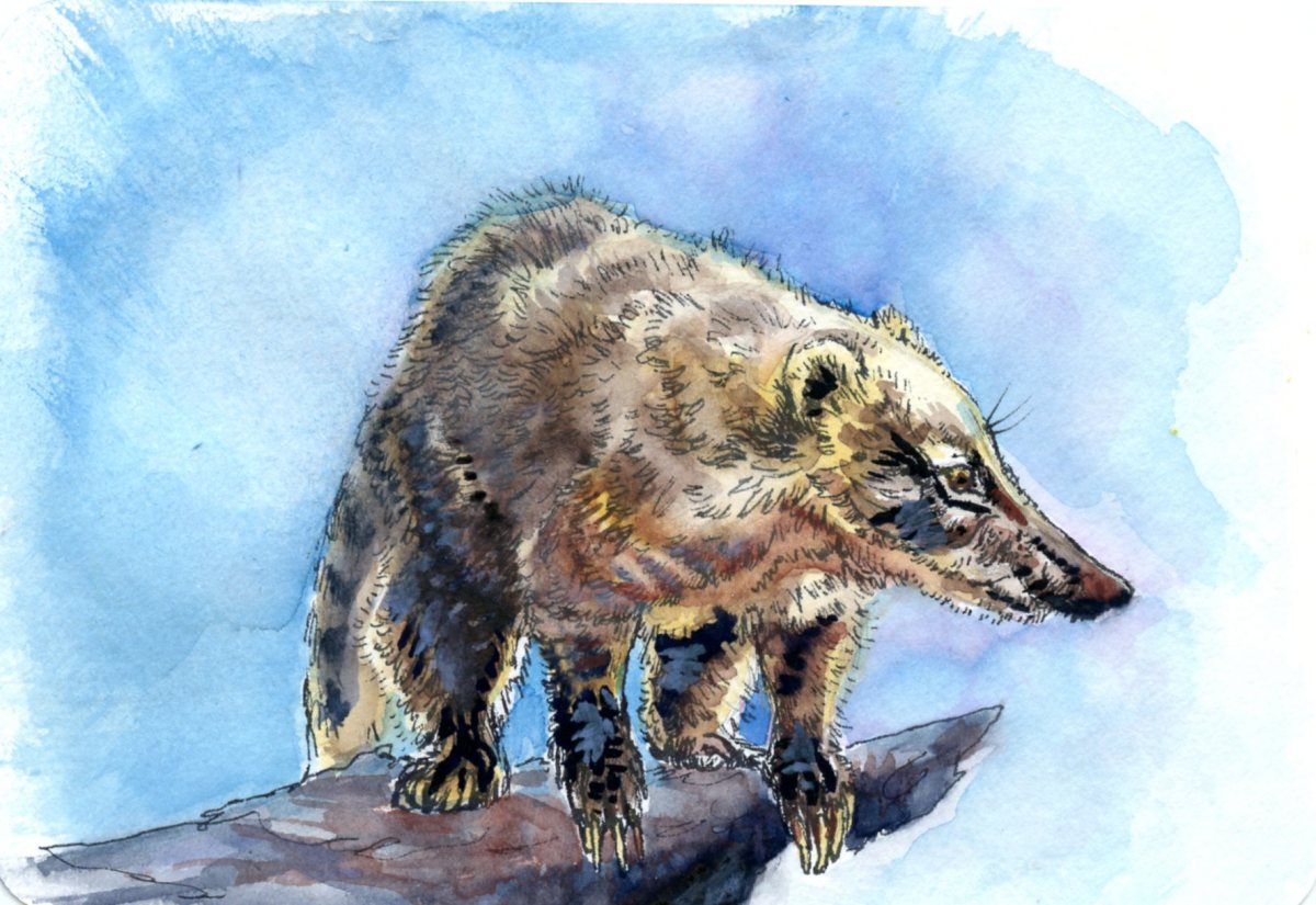 Hog-Nosed Raccoon – Postcards for the Lunch Bag