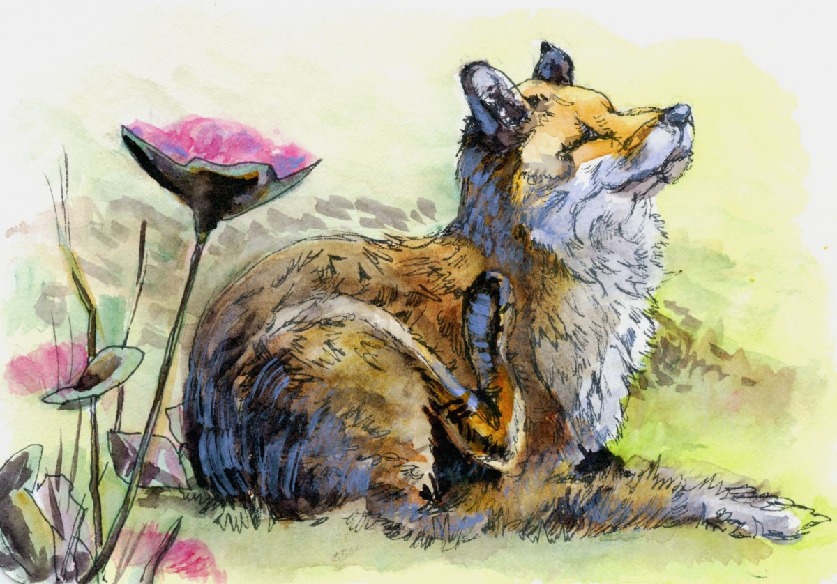 Malcolm's Fox – Postcards for the Lunch Bag