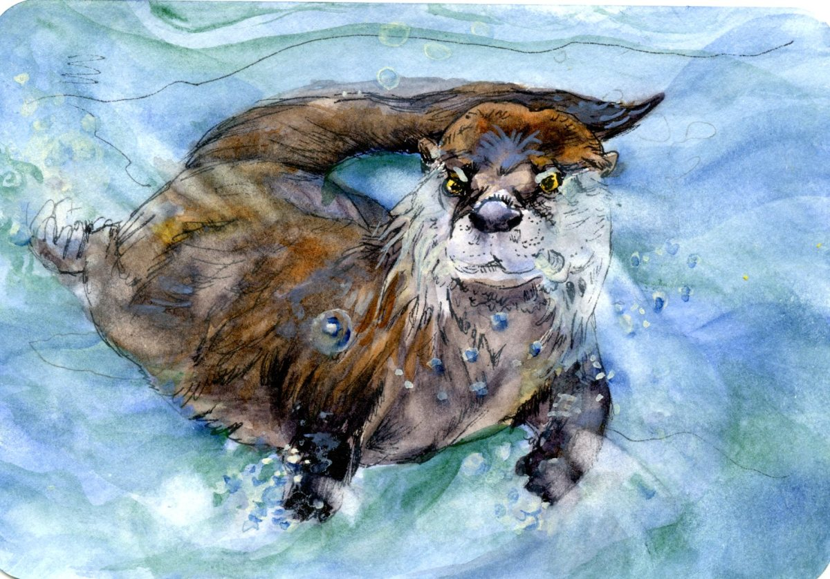 Otter Underwater – Postcards for the Lunch Bag