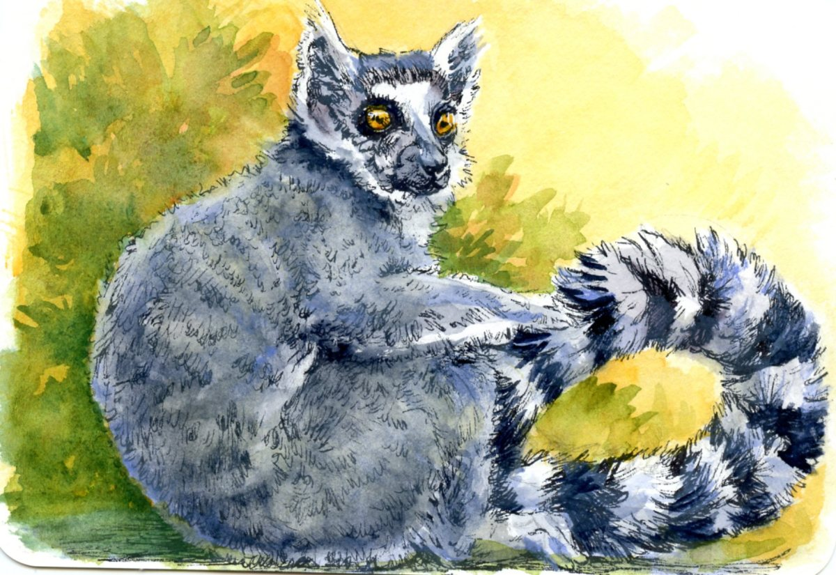 Ring Tailed Lemur – Postcards for the Lunch Bag