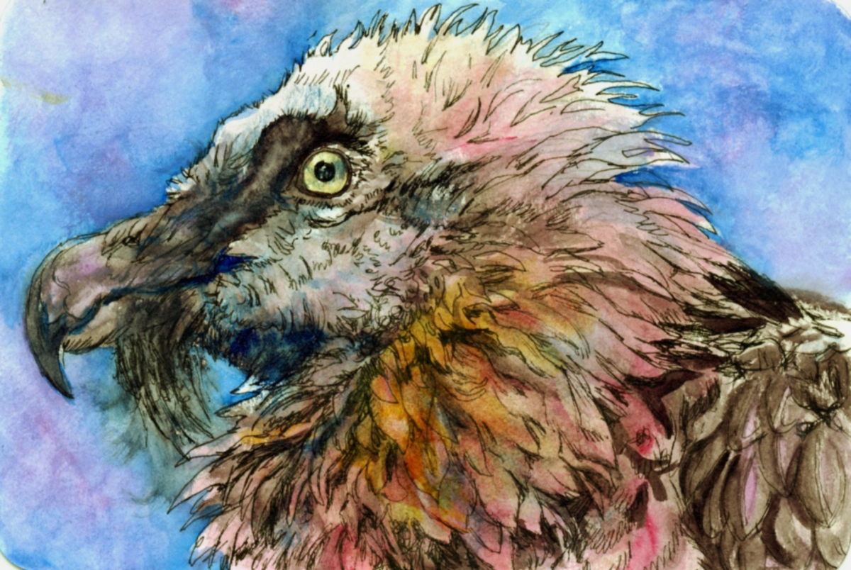 Pink Vulture – Postcards for the Lunch Bag